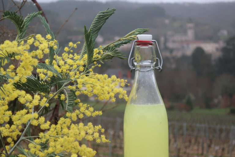 boisson pétillante fleurs de mimosa