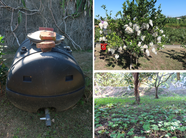 fertilisation marc de café et plantes compagnes