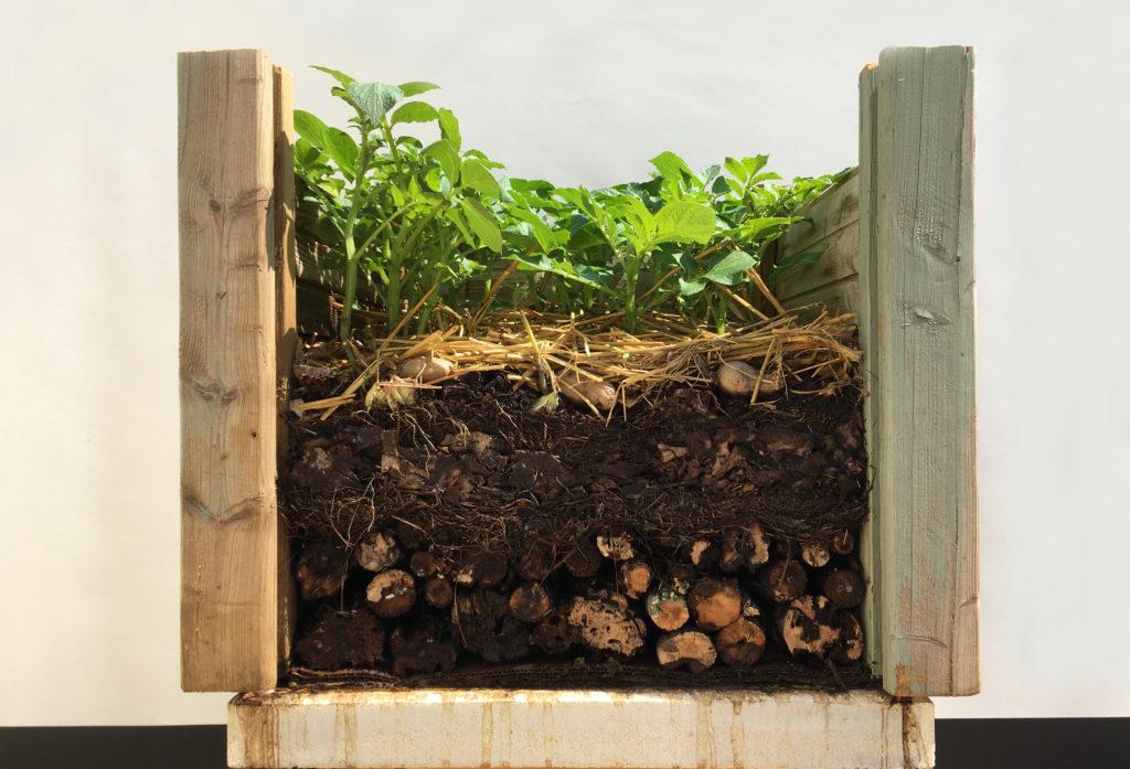 vue en coupe du sol nourricier après 1 mois