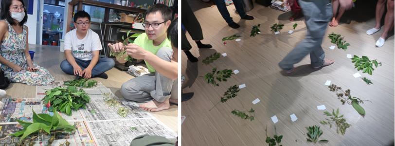 exercice d'identification et de mémorisation des plantes